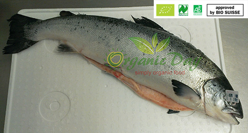 Organic Salmon Scotland or Ireland 4-5kg whole chilled